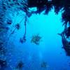 Туристический дайвинг под угрозой: коралловые рифы могут исчезнуть к 2040 году