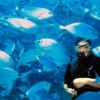 Дайвинг в Мальте: изучите подводный рай