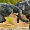 Лучшие парки дикой природы Западной Африки