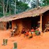 Экзотический туризм внутри пигмейского сообщества Камеруна: традиции, образ жизни и религия