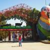 Обитатели Газиантепского парка устроили «версус батл»