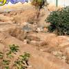 6 древних гробниц обнаружено в Анталии на юге Турции