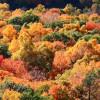 Осень показывает цвета от красного до желтого в горах Кюре