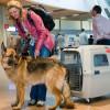 Путешествие в Турцию с домашними животными