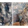 Вандалы повредили след динозавра в Австралии, которому насчитывалось 115 миллионов лет