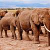 Какое сафари в Восточной Африке?