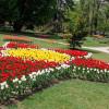 Турецкий фестиваль тюльпанов украшает парк Швейцарии