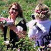 Испарта — «Страна Роз» Турции приглашает туристов на цветение удивительного растения