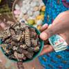 Традиционные продукты, которые вы должны опробовать, находясь в Замбии