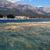 Цветение воды в море у берегов Кемера приняли за топливные отходы
