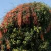 Обнаружено единственное в мире растение, размножающееся исключительно в полнолуние