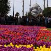 Turkish Airlines приглашает туристов на Фестиваль тюльпанов в Стамбуле