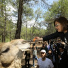 Сафари-парк в Газиантепе ставит рекорды посещаемости