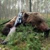 Прикормленная туристами медведица была отстрелена егерями на Камчатке