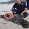Акула убила дайвера у берегов Австралии