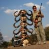 Большая охота: цена львиной головы