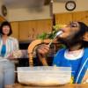 Учёные обнаружили у шимпанзе кулинарные таланты