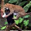 В Москве пойманы два безнадзорных леопарда