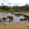 Шри-Ланка. Лесной заповедник Синхараджа