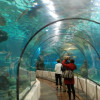 Крупнейший океанариум Европы будет построен в Петербурге