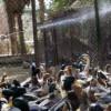Ростуризм предупредил россиян об опасности заражения птичьим гриппом в Египте