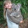 Власти Австралии признались в истреблении сотен коал