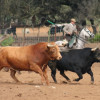 Андалузия: луг гладиаторов