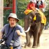 Слоны в Таиланде продолжают убивать людей