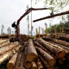 Учёные – каждое пятое дерево на Земле растёт в России