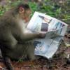 Американские учёные объединили мозг 3 обезьян в биологическую «локальную сеть»
