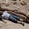 Российские учёные выдвинули новую теорию вымирания динозавров