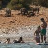 Оголодавшие кабаны «прописались» на пляже Бодрума