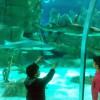 В Стамбуле откроется самый большой аквариум Sea Life в мире