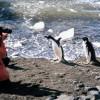 Путин считает идею развития туризма в Антарктиде перспективной