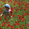 «Долина роз» в Ыспарте ожидает гостей