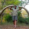Немецкий турист подстрелил в Зимбабве крупнейшего слона за последние 30 лет