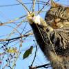 Пятигорские cотрудники экстренных служб отказались снимать кошку с высочайшего дерева