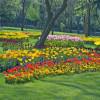 Фестиваль тюльпанов в Стамбуле откроется 4 апреля