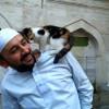 В Стамбуле появилась мечеть для котов