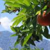 Апельсиновые рощи Кемера – курорт с витаминами