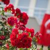 Дешевый отдых в Турции