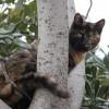 В Турции появился пятизвездочный «Город кошек»