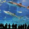 Откройте для себя подводный мир в гигантских аквариумах Турции