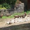 Парк дикой природы в Измире — идеальное место для экскурсий на побережье Эгейского моря