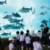 Речное сафари в Сингапуре – шикарный парк настоящей дикой природы