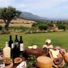Новые тренды туризма: пасем овец и делаем вино