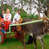 Фермерский туризм — последние тенденции в мире путешествий!