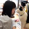 Кошкотерапия от стресса практикуется в японских офисах