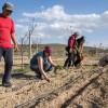В Конье процветает сельскохозяйственный туризм