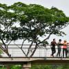 Джунгли в городе: Ботанический сад Сингапура